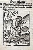 1491 Snake bite venom Hortus Sanitatis
