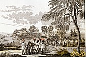 1805 Slavers separating women children
