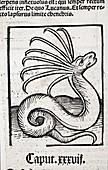 1491 Cerastes lure snake Hortus Sanitatis
