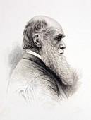 1874 Charles Darwin fine engraving Jeens