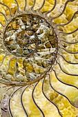 Pyrites Ammonite spiral Calcite crystals