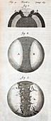 1684 Thomas Burnet Continental Drift