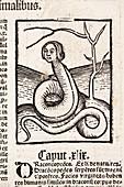 1491 Snake Woman Eve Hortus Sanitatis