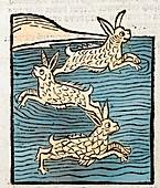 1491 Sea Hares from Hortus Sanitatis