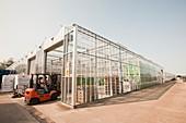 Greenhouses on the Lancashire mosslands