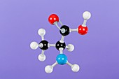 L-(+) alanine,molecular model