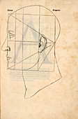 Proportions of the human face,1509