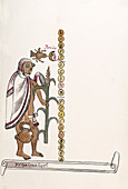 Aztec month Etzalcualiztli,16th century