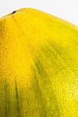 Pomelo (Citrus maxima)