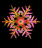 Coloured computer-enhanced image of a snowflake