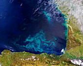 Phytoplankton in the Bay of Biscay