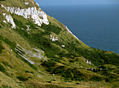 View of cliffs at White Nothe,Dorset