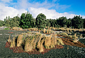Plant regrowth on lava flow