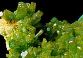 Hexagonal crystals of Pyromorphite