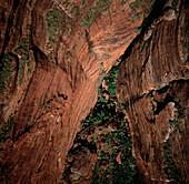 Gorge vegetation