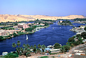 Vegetation growing along the banks of the Nile