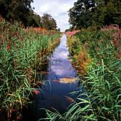 Stream in a nature reserve