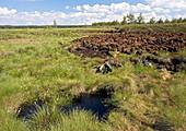 Peat bog nature reserve
