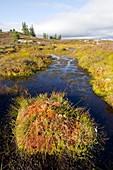 Peat bog,Scotland