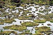 Cushion bog,Ecuador