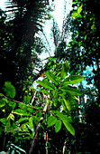 Vegetation in the Amazonian rain forest
