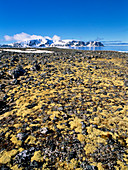 Coastal tundra vegetation,Fugloya,Svalbard