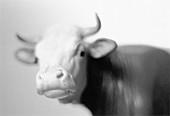 Sculpture of a bull