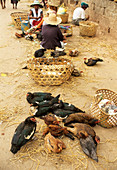 Birds on sale at a Madagascan market