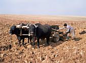 Farmer fertilising a field