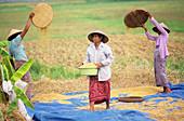 Women winnowing rice grains