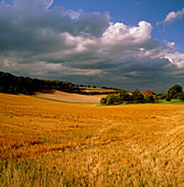 Rural landscape,straw stubble and cumulus clouds