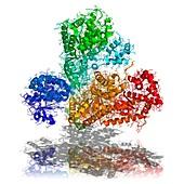 Anthrax toxin,molecular model