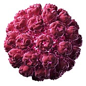 Simian virus 40 particle