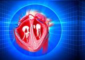 Human heart,artwork