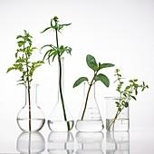 Medicinal plants,conceptual image