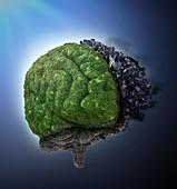 Urban and rural brain,conceptual artwork
