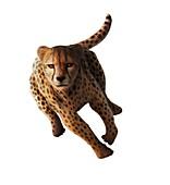Cheetah,artwork