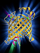 Outer membrane phospholipase A molecule
