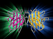 Copper,zinc superoxide dismutase enzyme
