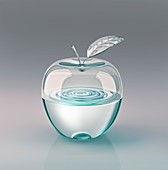Transparent apple with water inside