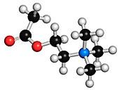 Acetylcholine neurotransmitter molecule