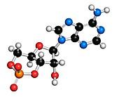 Cyclic adenosine monophosphate molecule