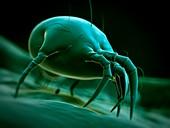 Dust mite,illustration