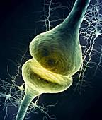 Synapse,illustration