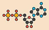 Adenosine diphosphate molecule