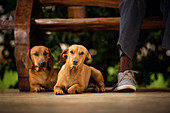 Dogs lying on floor under table