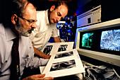 Biologists studying nematode worms
