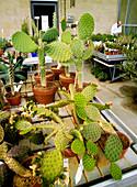 Cacti,Millennium Seed Bank