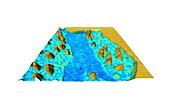 Plasma membrane proteins,AFM