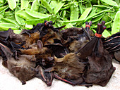 Bats on sale at a market